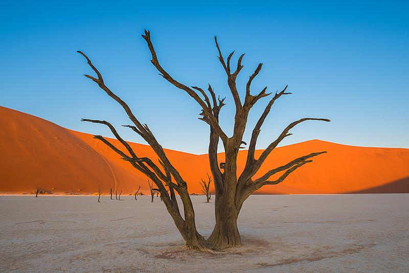 Nam 084 Dead Trees & Sand Dunes Sunset, Deadvlei, Namibia