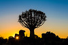 Nam 002 Quiver Tree  Sunset, Namibia