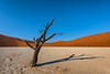Nam 107 Shadow Dance, Deadvlei, Namibia