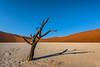 Nam 107 Shadow Dance, Deadvlei, Namibia