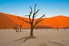 Nam 085 Dead Trees & Sand Dunes Sunset, Deadvlei, Namibia