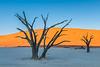 Nam 095 Dead Trees & Sand Dunes Sunrise, Deadvlei, Namibia