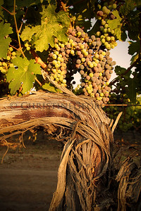 VINEYARDS DRY CREEK ROAD LAPPAS PROPERTY