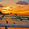 Seagulls and Sunsets