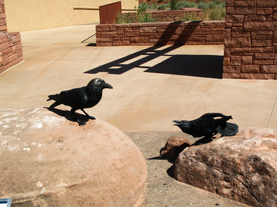 Ravens, Visitor Center, Arches National Park