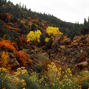 Fall Color, Bandelier NM