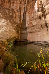 North America, USA, New Mexico, El Morro National Monument, Waterhole