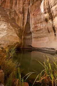 North America, USA, New Mexico, El Morro National Monument, Waterhole
