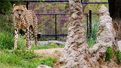 National Zoo - April 2015