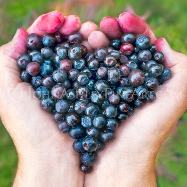 """Huckleberry Heart."""