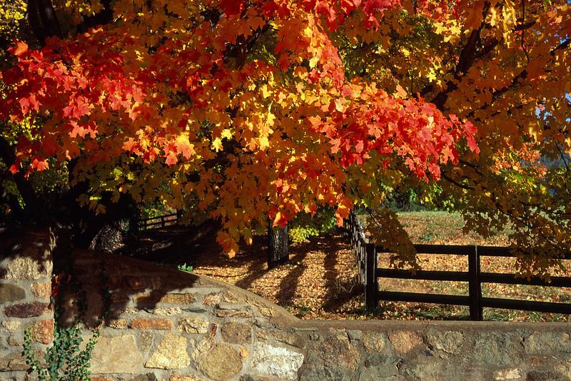 Stone Wall/Fall Trees