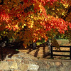 Stone Wall/Fall Trees