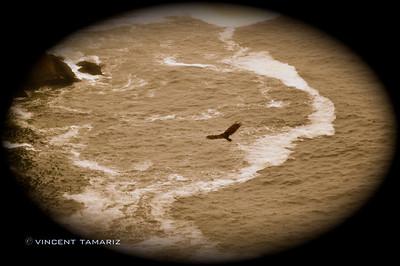 Point Reyes National Park copy