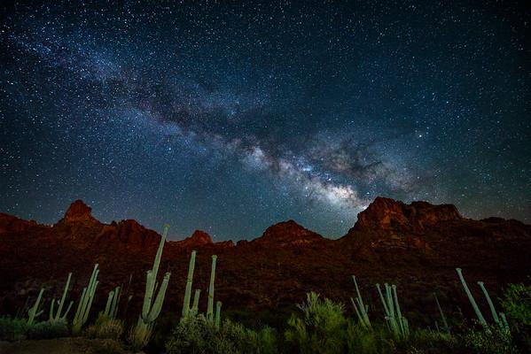 024 - Saguaro's Pointing Upward, Martinez Canyon, Arizona