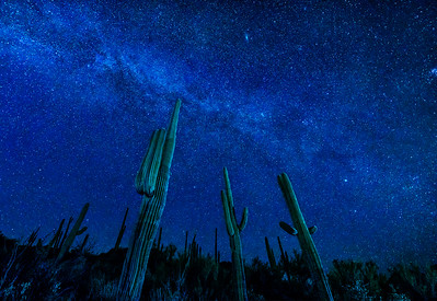 Blue Starry Night, Desert of Arizona