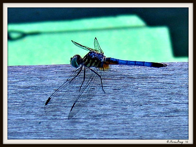 drgnfly
