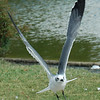 birds033