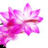 bloom012