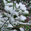 Fresh snow on January 1 2004. Verse sneeuw op Nieuwjaarsdag.