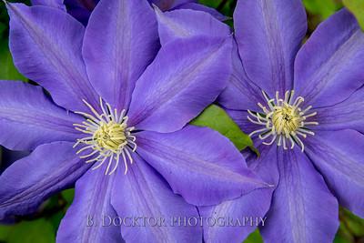 1605_Innisfree Garden_017