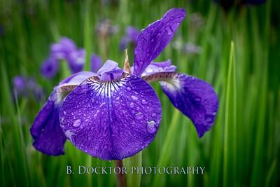 1606_my garden after rain_009