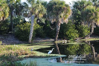 Florida Everglades_3275