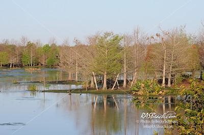 Florida Everglades_203
