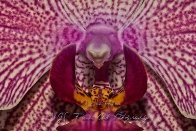 """""""Guru flower in Lotus position."""""""