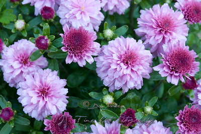 Flowers close up.