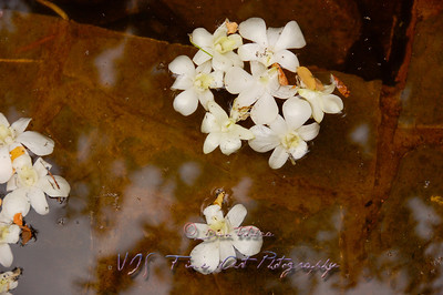 White flowers floating.