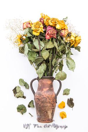 Dried Roses in Vase
