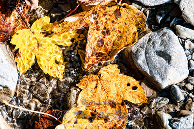 Fallen Leafs among Rocks