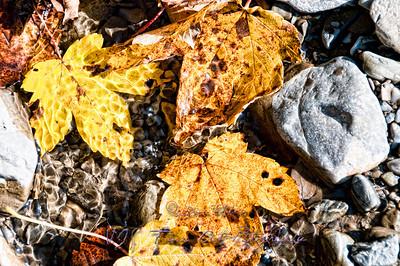 Fallen Leafs among Rocks