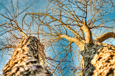 November sun falling on trees.