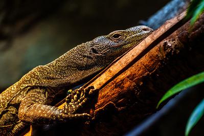Reptile Lounge