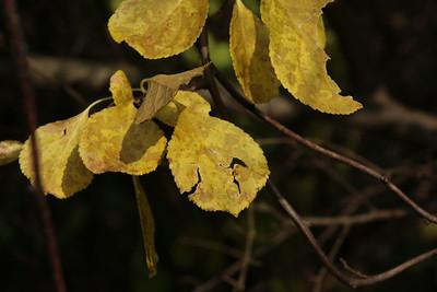 Nature around Moffit Reservior