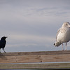 Seagull & bird hanging out at the fishing dock