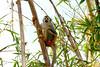 AZ-Phoenix-Zoo-Monkey-2006-07-04-0002