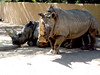 AZ-Phoenix-Zoo-2004-10-17-0008