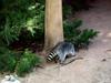 AZ-Phoenix-Zoo-2004-10-17-0012