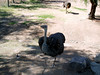 AZ-Phoenix-Zoo-2004-10-17-0010