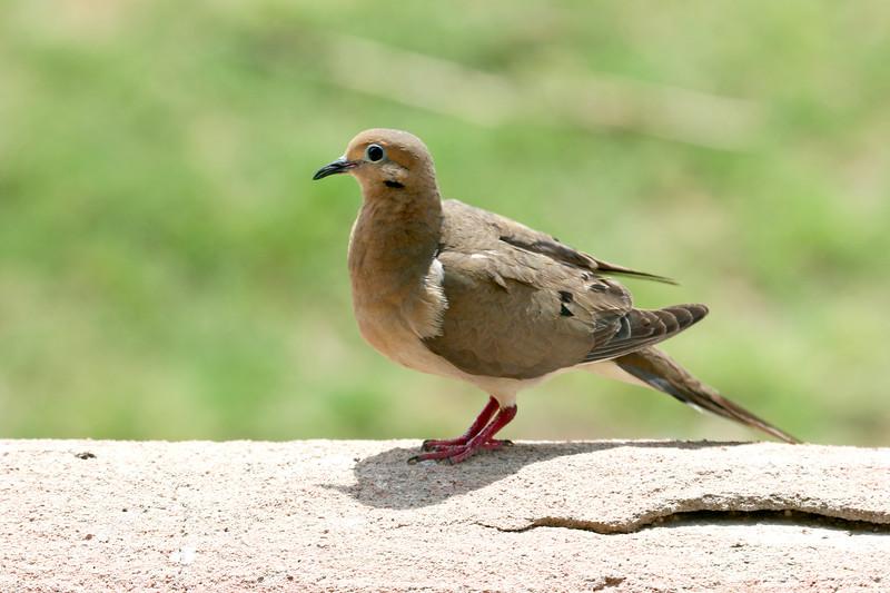 AZ-Phoenix-Zoo-Bird-2006-07-04-0005
