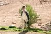 AZ-Phoenix-Zoo-Bird-2006-07-04-0004