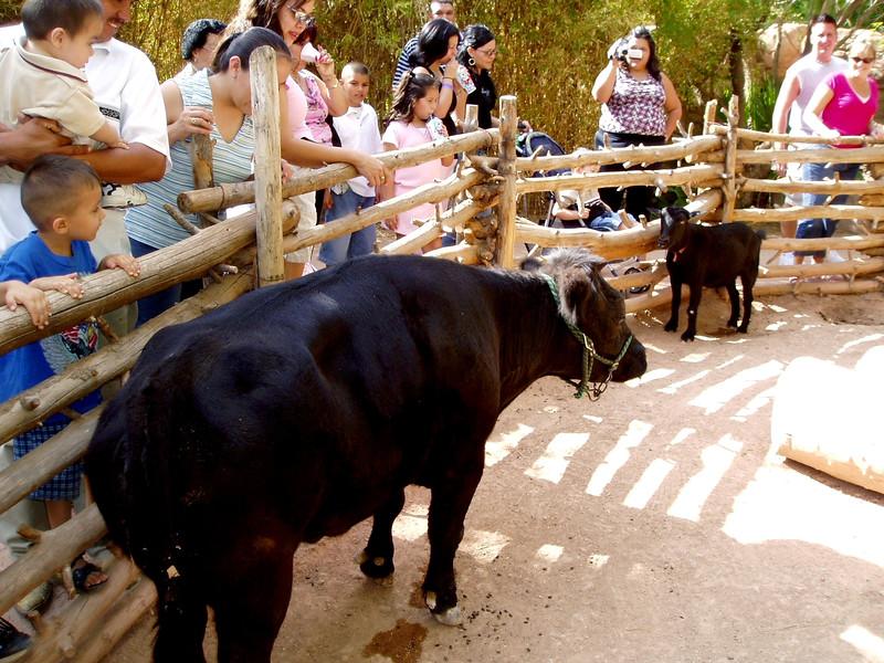 AZ-Phoenix-Zoo-2004-10-17-0011