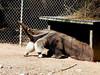AZ-Phoenix-Zoo-2004-10-17-0023
