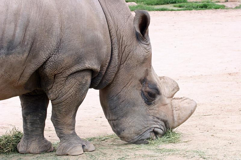 AZ-Phoenix-Zoo-Wildlife World-White Rinoceros-2006-07-02-0001