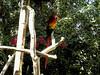 AZ-Phoenix-Zoo-2004-10-17-0024