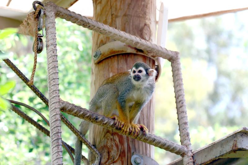 AZ-Phoenix-Zoo-Monkey-2006-07-04-0001