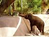 AZ-Phoenix-Zoo-2004-10-17-0013