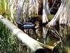 AZ-Phoenix-Zoo-2004-10-17-0029